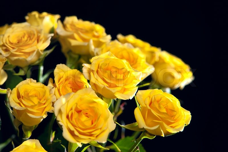 Beautiful bouquet of yellow roses isolated on black ...