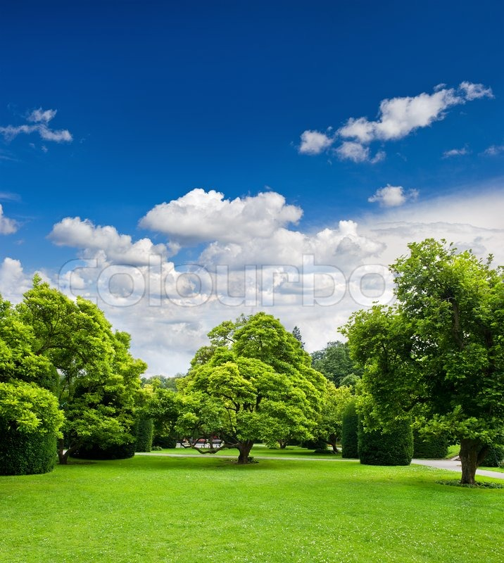 beautiful park trees over blue sky formal garden stock photo colourbox
