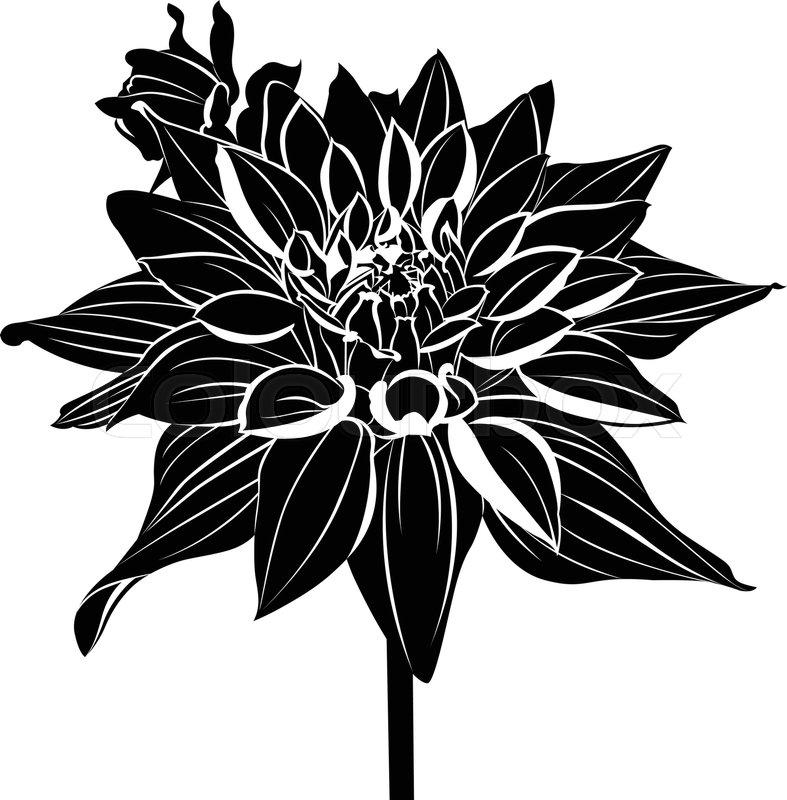 Dahlias vintage elegant flowers black and white vector vintage elegant flowers black and white vector illustration dahlias flowers vector vector mightylinksfo