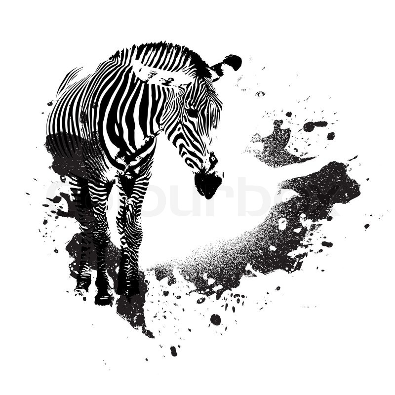 Zebra in black and white with splatted paint accents stock vector colourbox