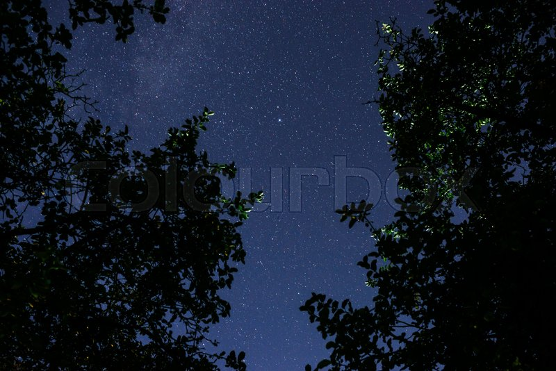 Blue dark night sky with many stars above field of trees. Milkyway cosmos background, stock photo