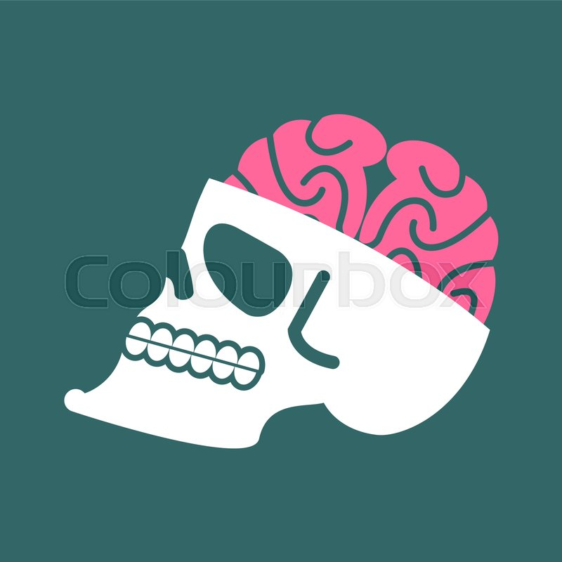 Skull with brains isolated. head of human skeleton and brain ...