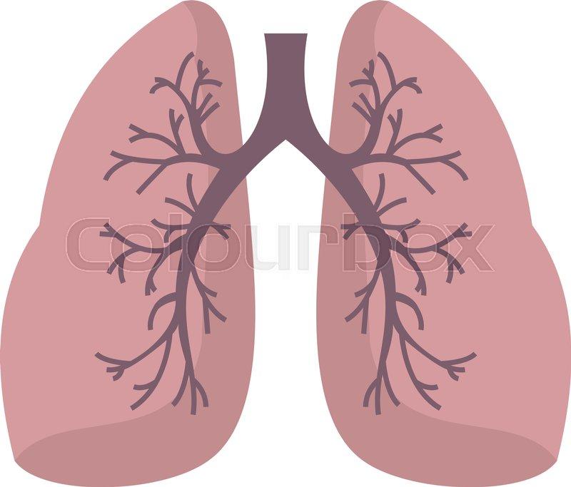 Lunge, anatomie, atem-   Vektorgrafik   Colourbox