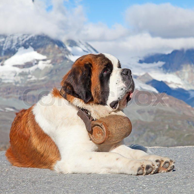a companionship story with my dog sandi
