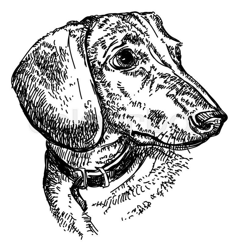 Gravhund huslig tegning stock vektor colourbox - Dessin teckel ...