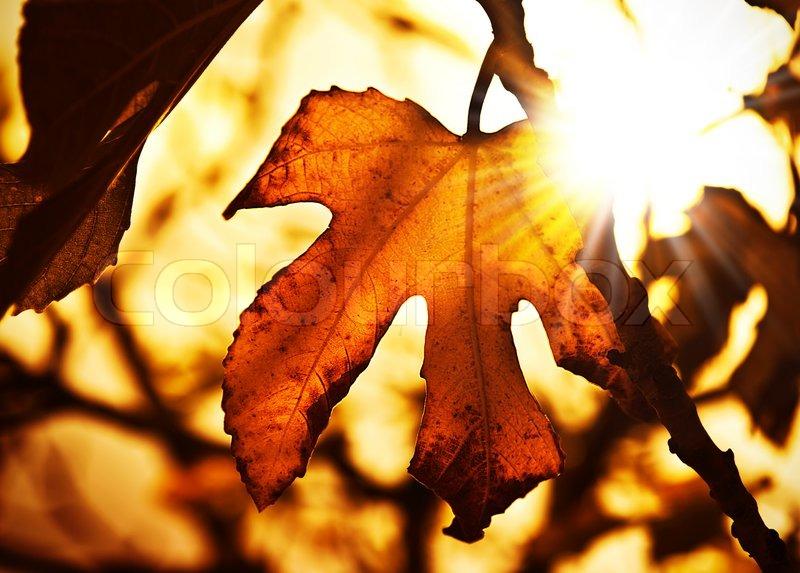 Grunge Autumn Dark Background With Dry Stock Photo