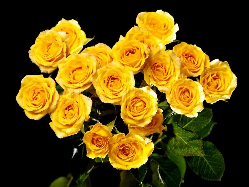 Beautiful bouquet of yellow roses isolated on black background beautiful bouquet of yellow roses isolated on black background stock photo colourbox mightylinksfo