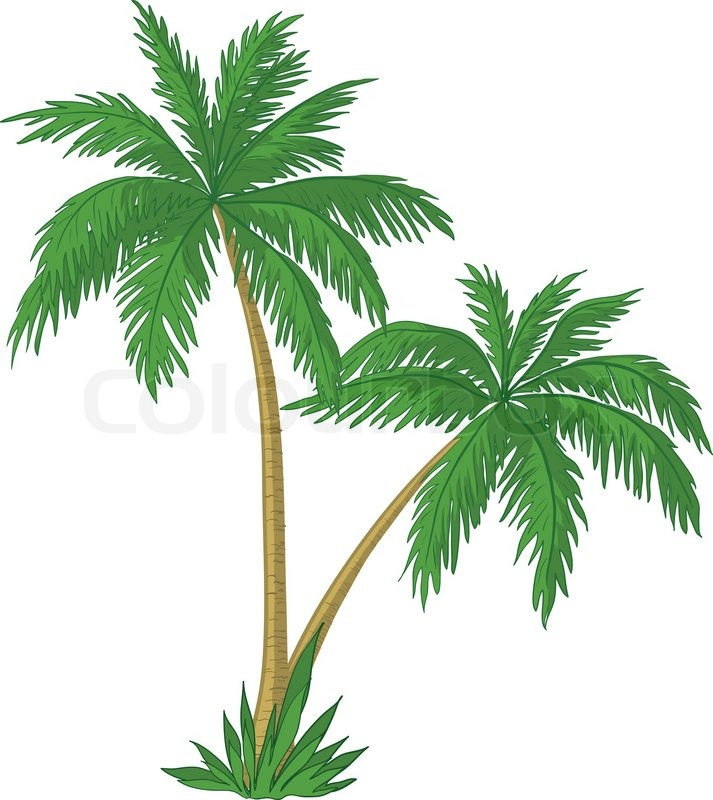 vector palm trees with green leaves on white background stock rh colourbox com palm tree leaves background vector