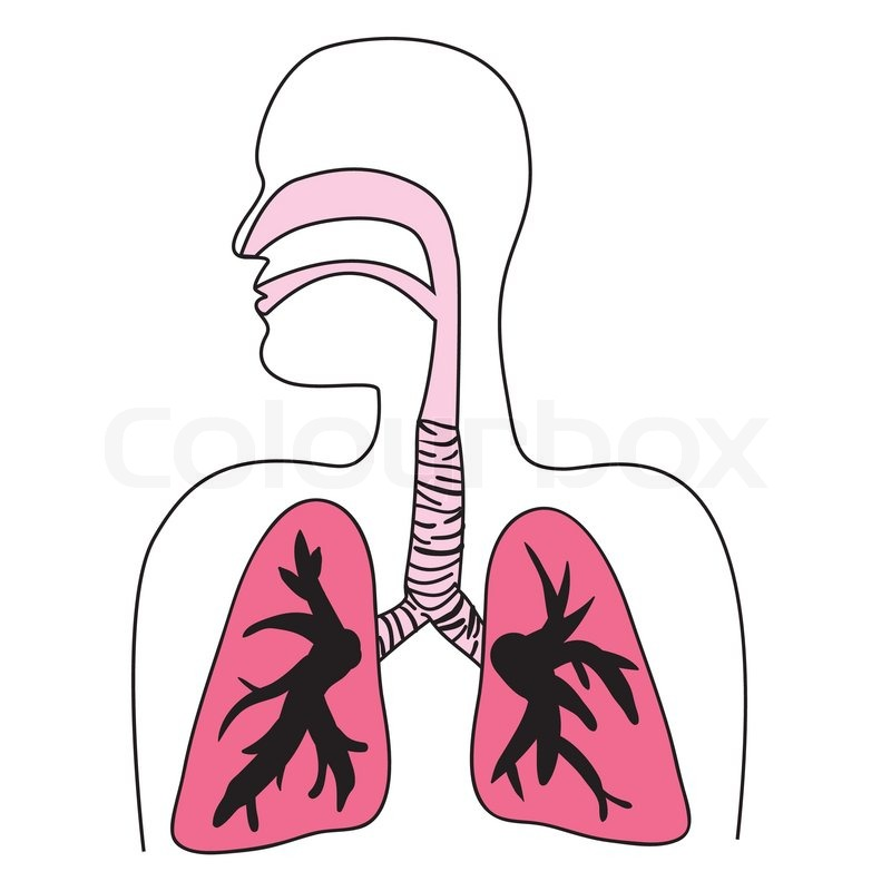 cytokines of the lung lung biology in health and disease