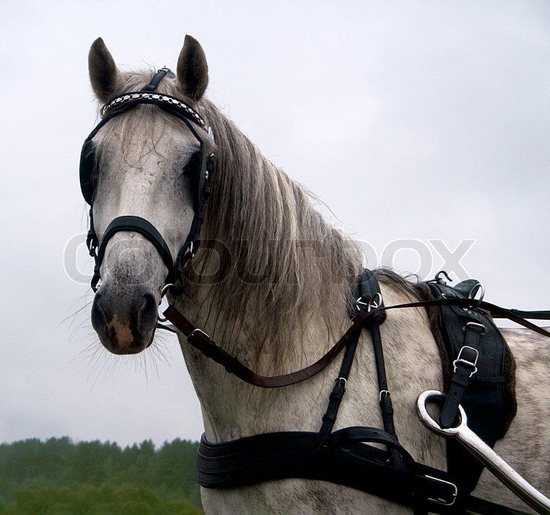 den hvide hest gratis datingsider for voksne