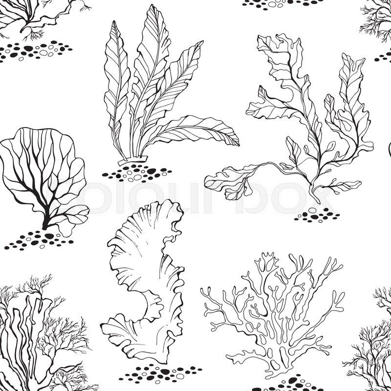 Line Drawing Kelp : Seaweed seamless vector pattern with underwater plants