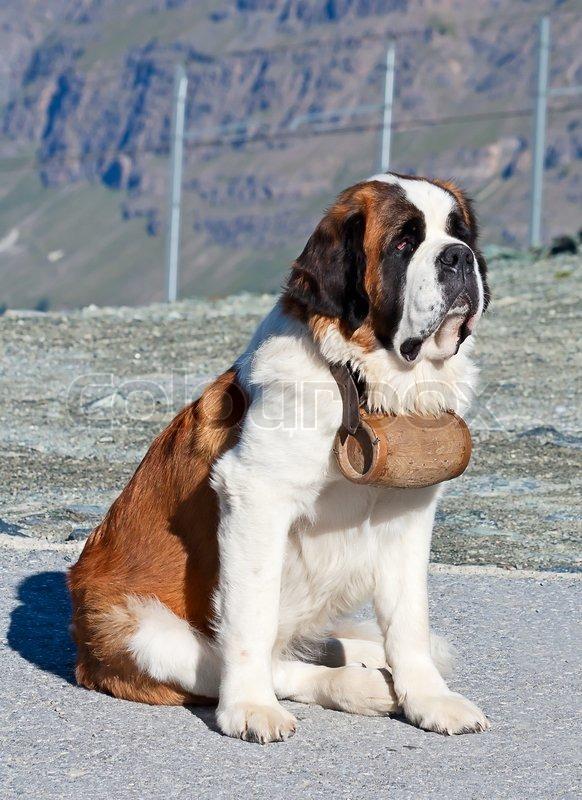 Saint Cloud Dog Rescue