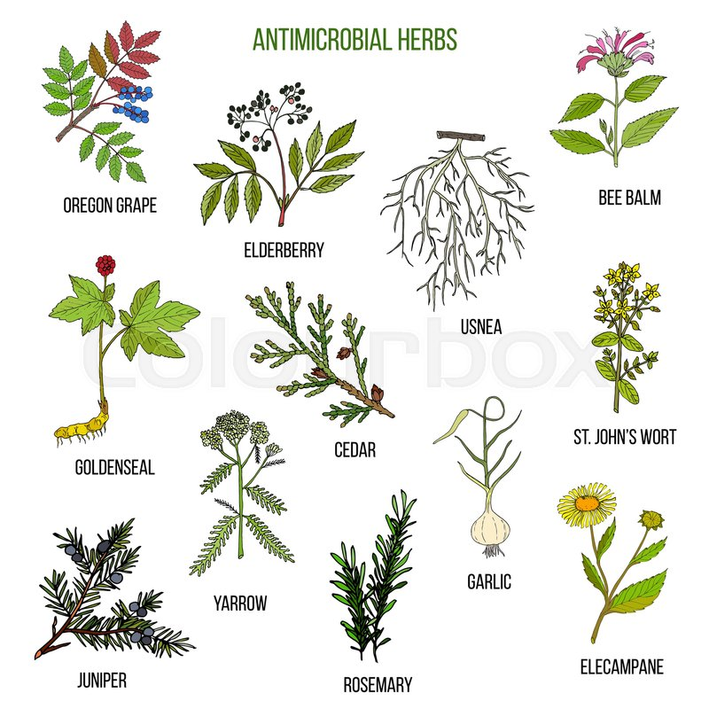 antimicrobial herbs hand drawn vector set of medicinal Phone Icon Vector Phone Icon Vector