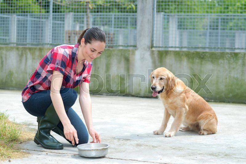 Stock image of 'Dedicated girl training dog in kennel'