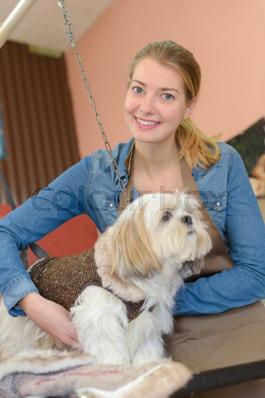 Pet grooming business, stock photo