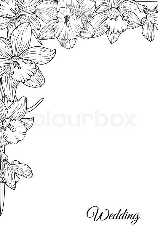 Narcissus Daffodil Blooming Flowers Corner Border Frame Template Black And White Floral Vector Design Illustration Detailed Outline Sketch