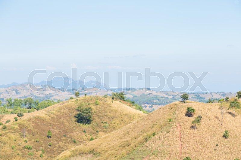 Mountain forest destruction problem Deforestation is a natural problem causing drought, stock photo