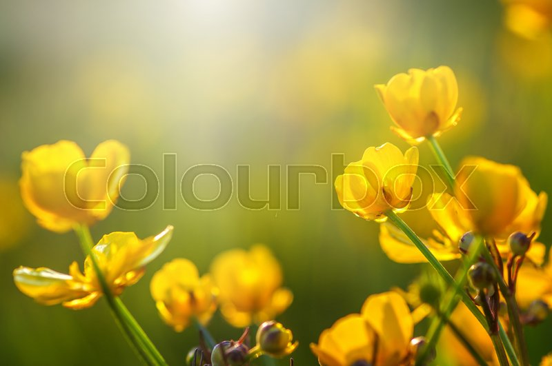 Field of spring flowers and sunlight, stock photo