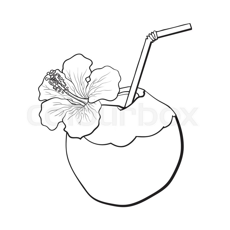 Coconut Cocktail Drink Decorated With Hibiscus Flower Summer Vacation Attribute Sketch Vector Black And White Illustration Isolated On Background