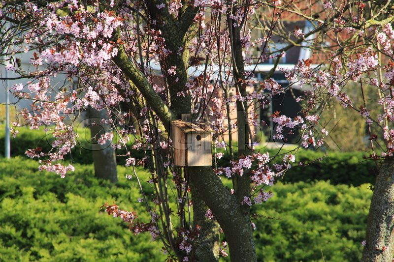 A nest box in a trunk of the tree with pink blossom in the backyard a nest box in a trunk of the tree with pink blossom in the backyard in the residential area in the village in wonderful spring stock photo mightylinksfo