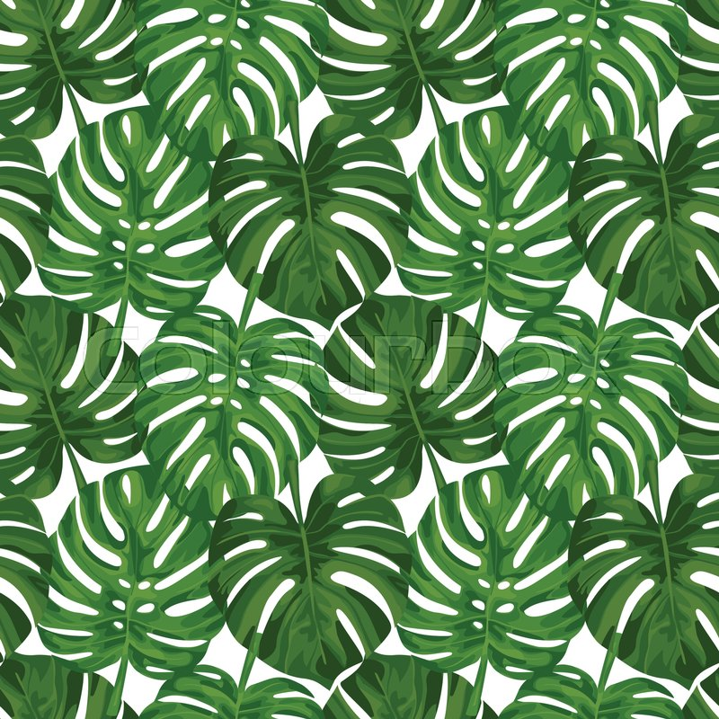 tropical pattern wallpaper  Seamless pattern of tropical green monstera leaves isolated on white ...