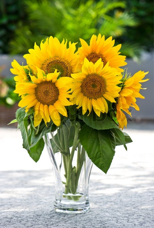 Sunflowers in a transparent glass vase on nature ...