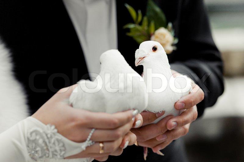 hvide duer til bryllup