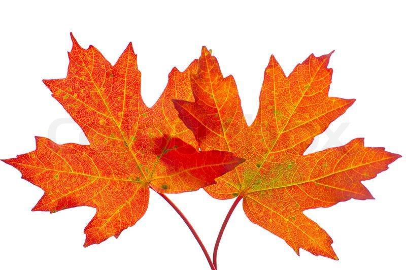 Blatter Herbst Laub Rot Gelb Stockfoto Colourbox