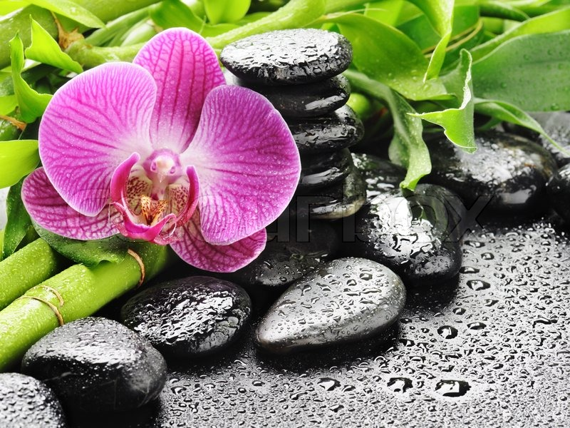 Wallpaper bambus und steine  Spa concept with zen stones and orchid | Stock Photo | Colourbox