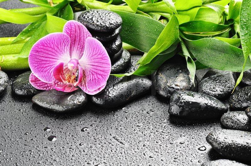 spa konzept mit zen steine und orchidee stockfoto. Black Bedroom Furniture Sets. Home Design Ideas