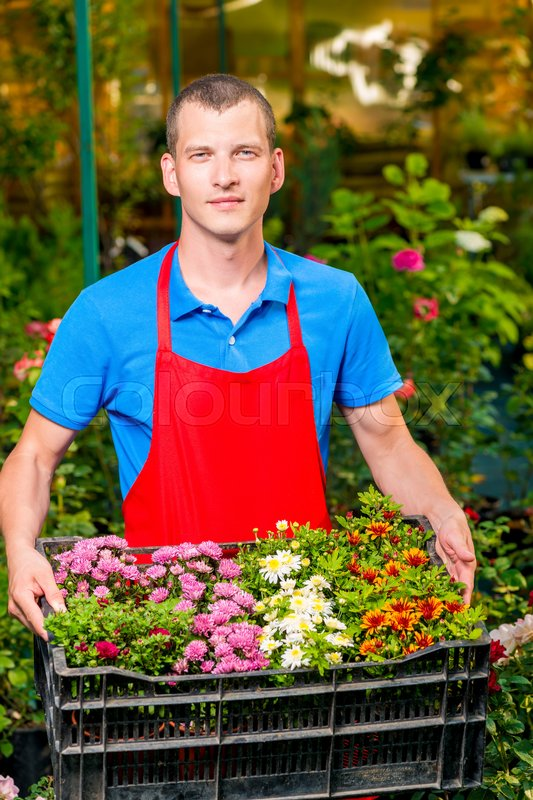 Man gardener with a box of flowers for sale in a greenhouse, stock photo