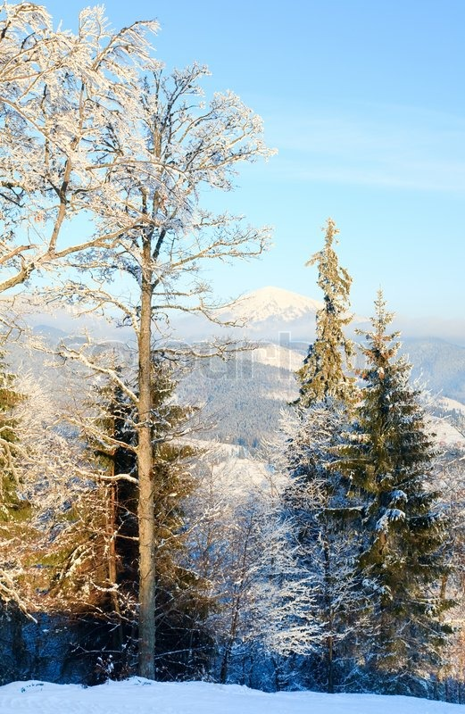 Winter calm mountain landscape with rime and snow covered trees in front, stock photo
