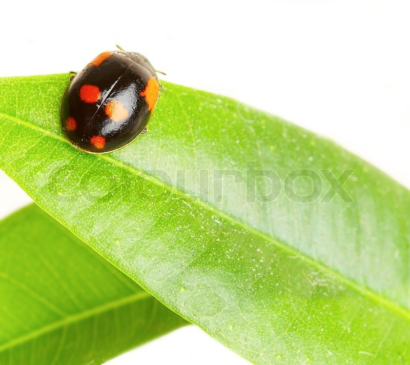 Stock image of 'The small bug on a leaf of a plant'