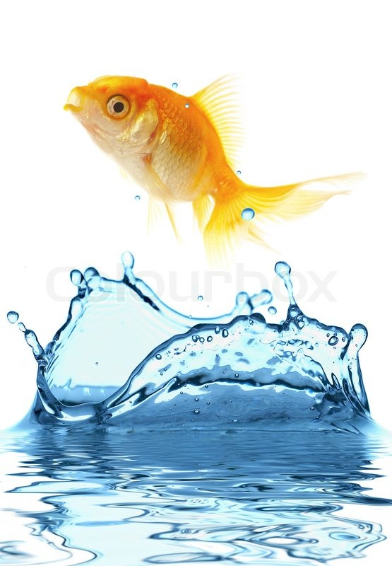 The gold small fish jumps out of water stock photo for A fish out of water
