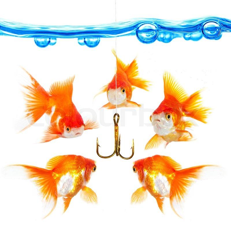 F nf kleine fische am haken stockfoto colourbox for Kleine fische