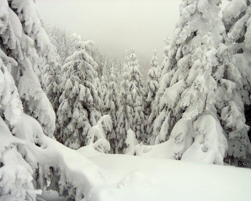 winterberg rau und nebel landschaft mit gro en gefrorenen schnee bedeckten stockfoto colourbox. Black Bedroom Furniture Sets. Home Design Ideas