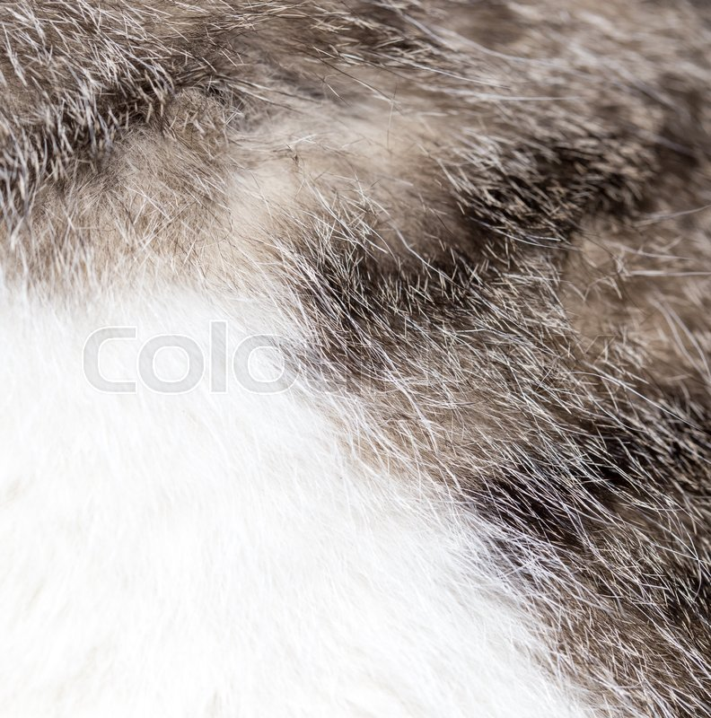 Fluffy cat hair as background. Beautiful texture, stock photo