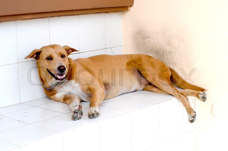 Dog sleep at house,outdoor of house, stock photo