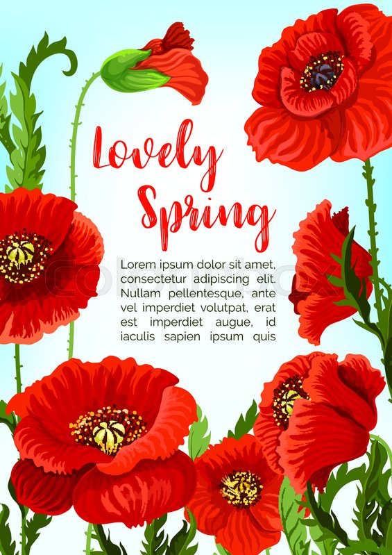 Spring Poppy Flowers Blossoms And Buds In Bloom For Vector Greeting Card Or Poster Design Blooming Green Nature Fields Of Red Flourish