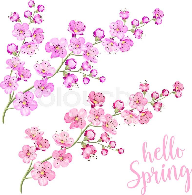 Pink cherry blossom or sakura twig isolated on white background pink cherry blossom or sakura twig isolated on white background flower spring invitation vector illustration vector stopboris Choice Image
