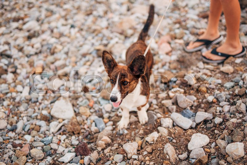 The dog runs and sports on the beach in Montenegro, stock photo
