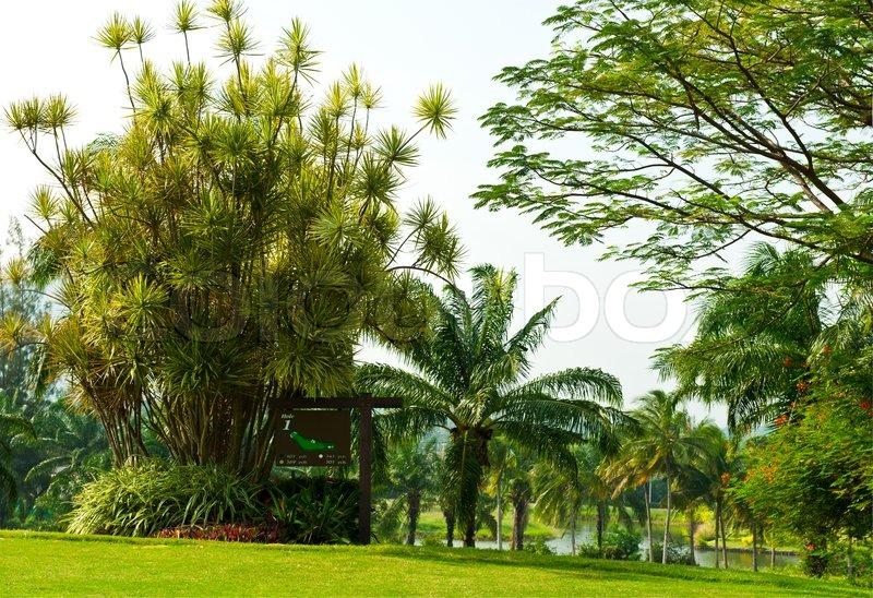 Tropical Landscape With Palm Trees Stock Image Colourbox