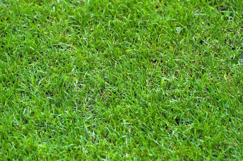Background Green Grass Of A Football Stadium Stock Photo