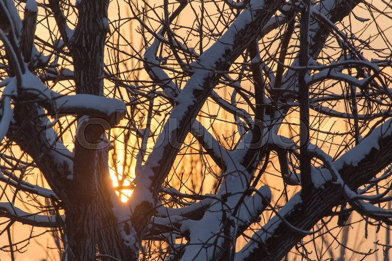 Bare branches of a tree in the sun dawn , stock photo