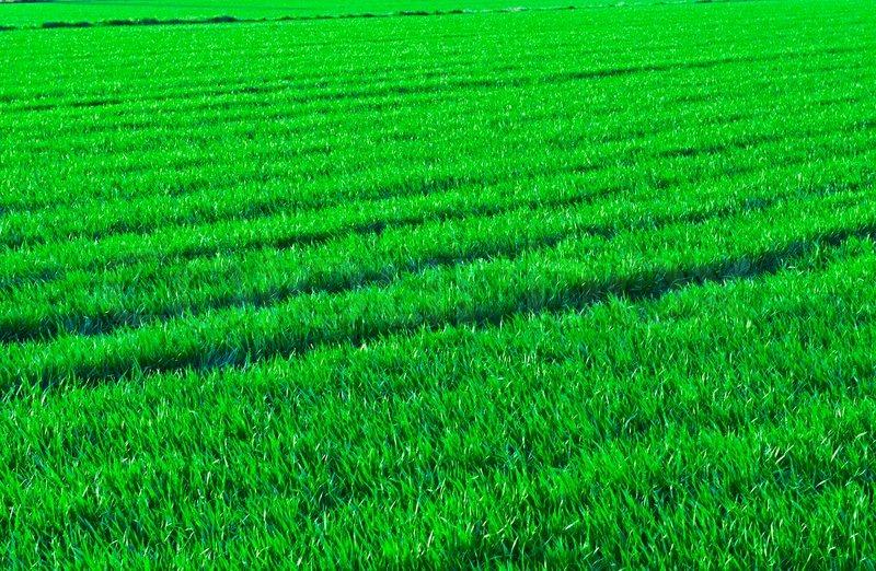 Cloud 9 Wallpaper New Fresh Pubg Wallpaper Hd Wallpaper: Natural Background Of Fresh Green Grass