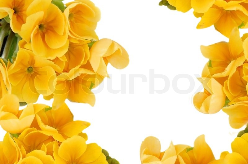 2586956 yellow spring flowers frame over white background