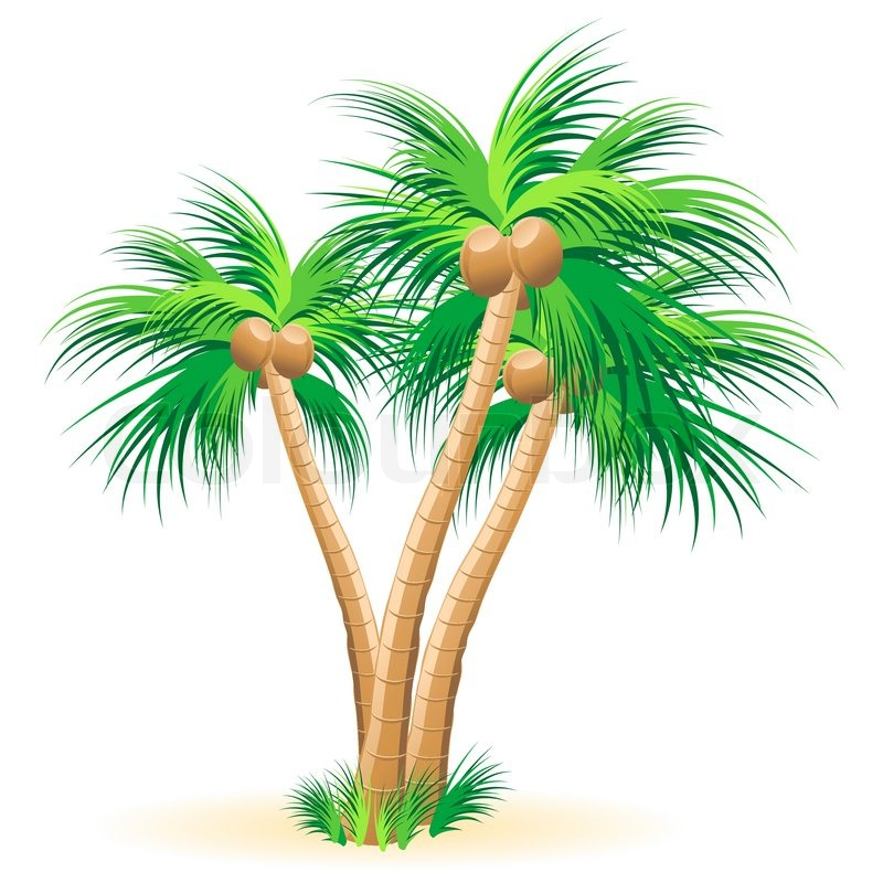 tropical palm trees vector stock vector colourbox rh colourbox com African Tree Vector Tropical Leaves Vector