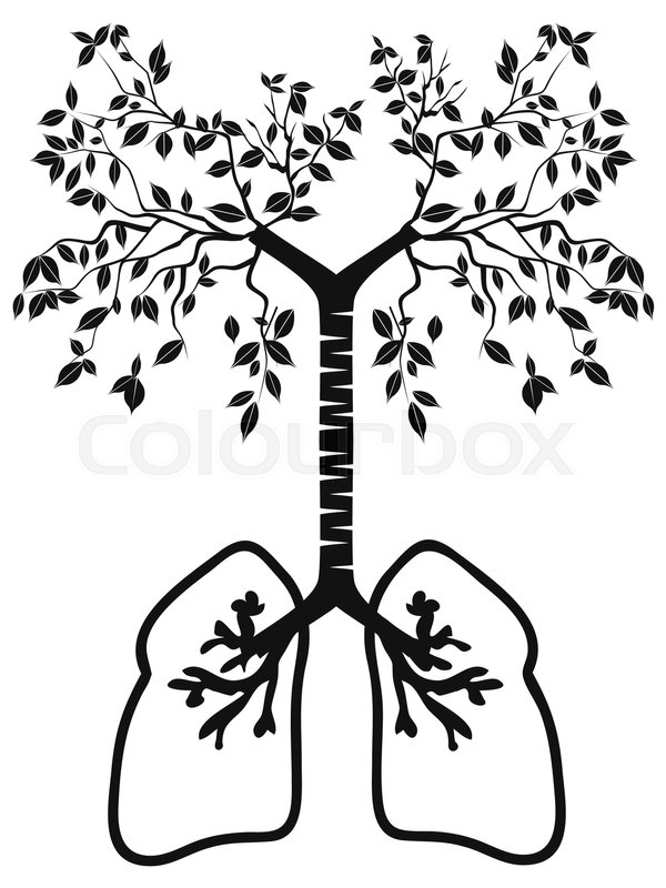 Isolated Lung Tree From White