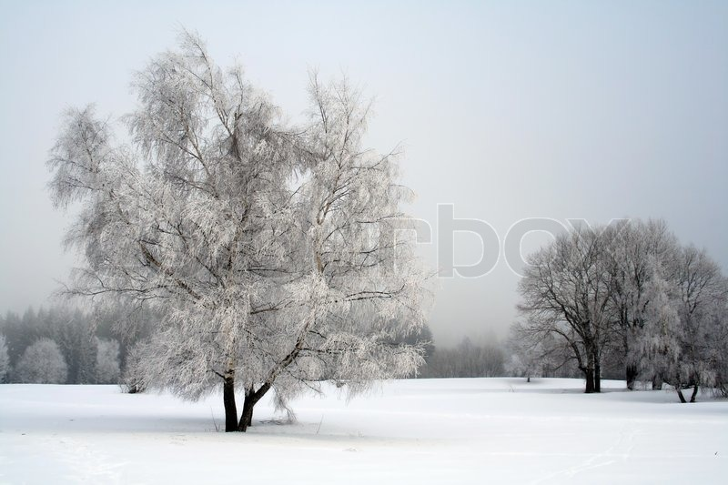Snow landscape with trees, stock photo