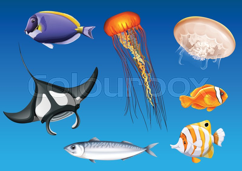 Different kinds of sea animals underwater illustration, vector